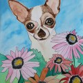Chihuahua Day 6 of 30 Paintings in 30 Days - Lillian Connelly