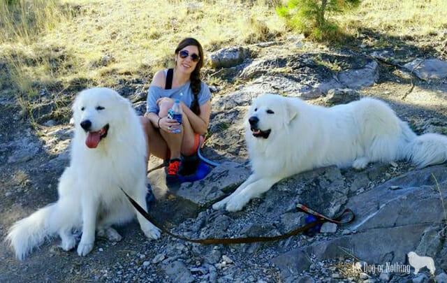 osteosarcoma dogs
