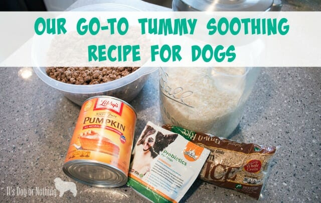 When dealing with upset stomachs in dogs, there are a few go-to ingredients that can assist in helping your dog to feel better. Here is what we feed our dogs when they're suffering from diarrhea or other stomach upset.