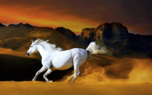 world-most-beautiful-horse-picture-wallpaper-2013