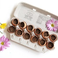 5 Creative Ways to Recycle Egg Cartons