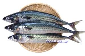 gomasaba4(2780-1838)