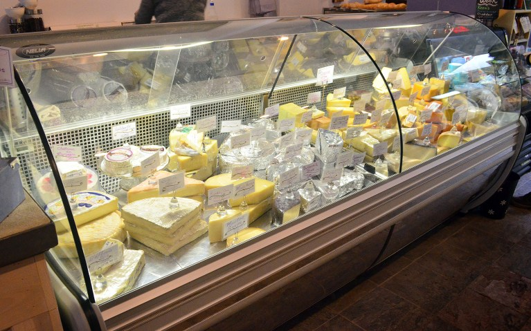 I've Been Bit! A Travel Blog :: The Cheese Gallery