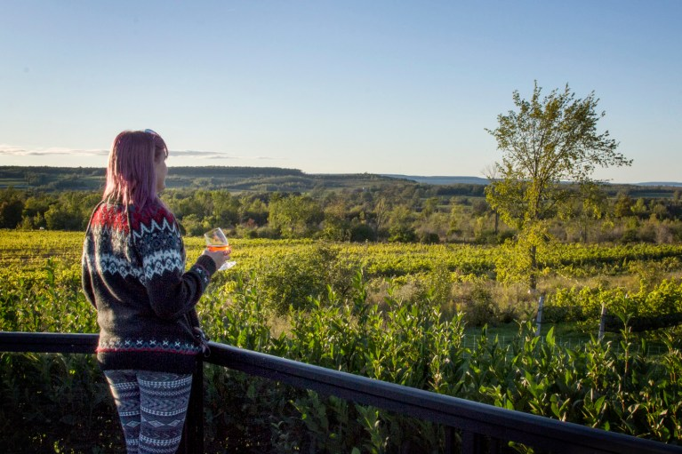 I've Been Bit! A Travel Blog - Grey County Autumn Adventures Coffin Ridge Winery Overlooking Vines and Georgian Bay