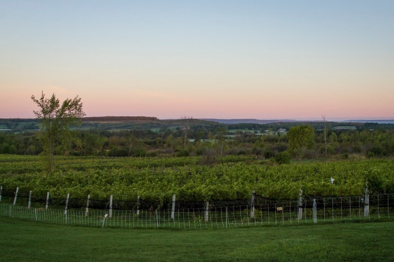 I've Been Bit! A Travel Blog - Grey County Autumn Adventures Coffin Ridge Winery The Resting Place Overlooking Vineyards