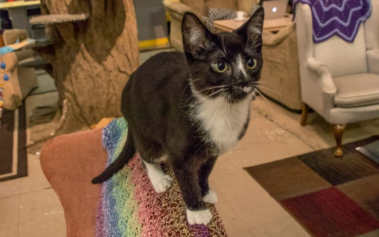 Disco at My Kitty Cafe Guelph :: I've Been Bit! A Travel Blog