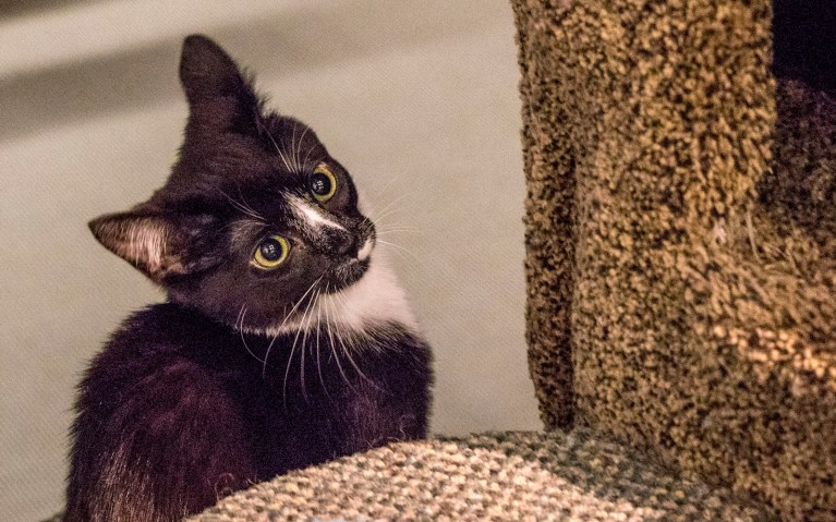 Disco on a Tear in Guelph's Cat Cafe :: I've Been Bit! A Travel Blog