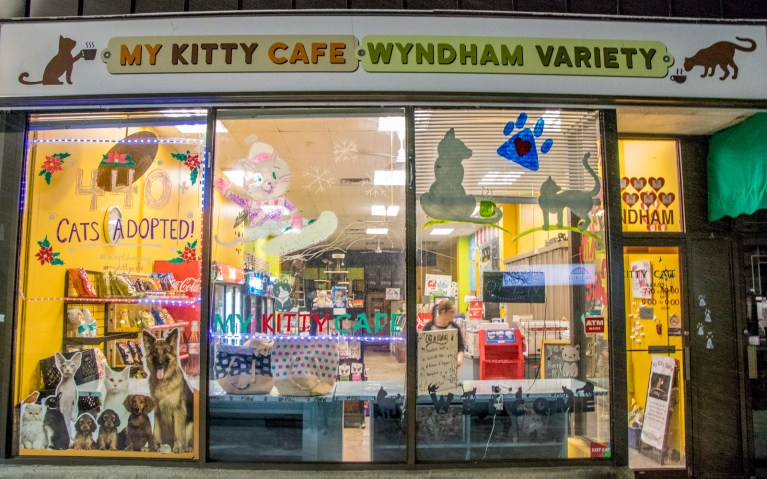 Outside of My Kitty Cafe at 117 Wyndham St N in Guelph :: I've Been Bit! A Travel Blog