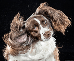 Your daily dose of cute: Dogs photographed mid-shake
