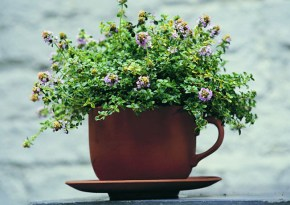 Pretty pots and planters for patio perfection