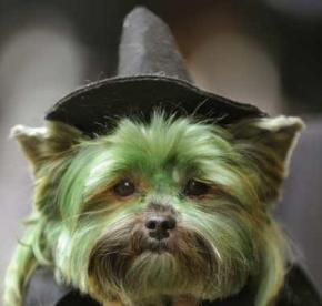 Dogs dressed up for Halloween. As you do