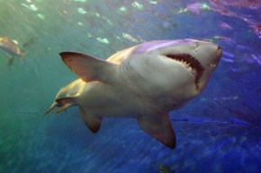 Could sharks hold the key to curing breast cancer?