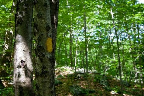 The Ivory Hut: Yellow blaze
