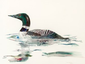 JMM_Birds_Loon