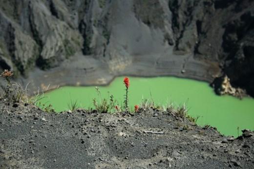 volcanic_bloom_1080