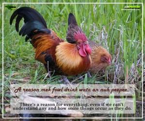 Ja Proverb_A Reason Mek Fowl_FB