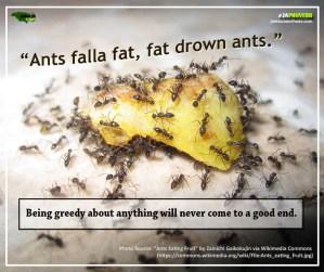 Ja Proverb_Ants Falla Fat_FB