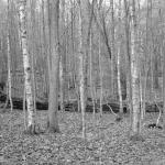 "Noirish Project Blog: ""Using Improvised Scenes With A Script"""