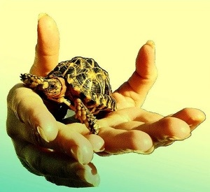 Can I offer a helping hand? Tortoise optional. Image courtesy to Jan Tik