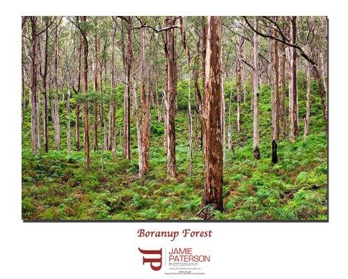 boranup, boranup forest, australian landscape photography, australian landscape photographers