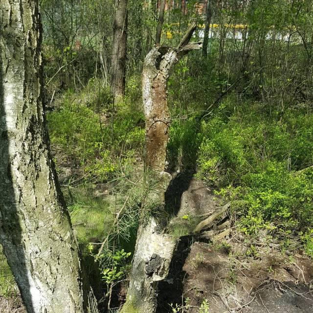 Mae yciowe sukcesy dopadaj mnie nawet w lubelskich lasach Znalazamhellip