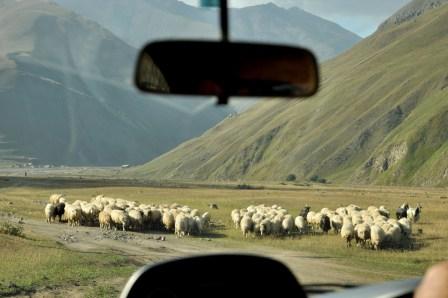 Zamykamy pętlę w Kvemo Okrakana. Na szczęście umówiony kierowca przyjechał po nas, by zabrać w kolejny rejon Kazbegi.