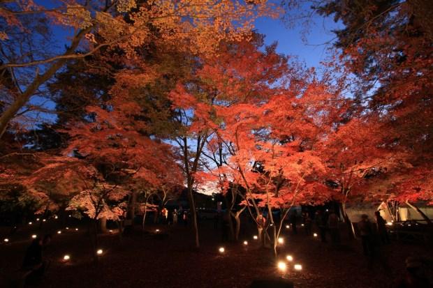 月の石もみじ公園・寶登山神社 紅葉ライトアップ
