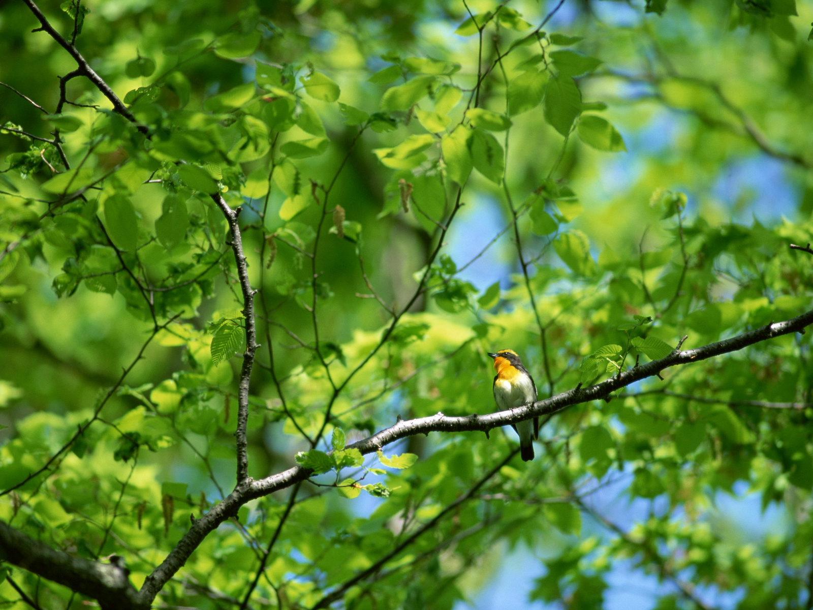 Natural Bird On A Branch A Tree Japanese Photolog Bird On A Branch Tattoo Meaning Bird On A Branch Template A Tree Bird On A Branch houzz-03 Bird On A Branch