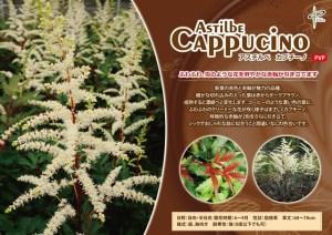 asuchirube-kapuchi-no6