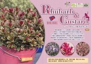 hebe-rhubarb-custard6