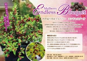 mulberry-endlessbouquet6
