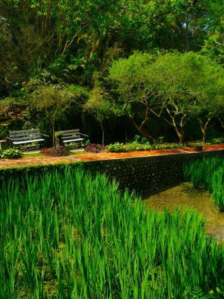 Sanyi, miaoli - greenery