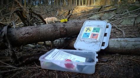 kesz w lesie, tym razem ze świnką w środku