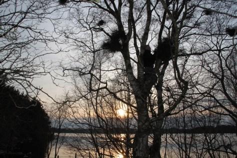 zdejmowanie kesza z drzewa