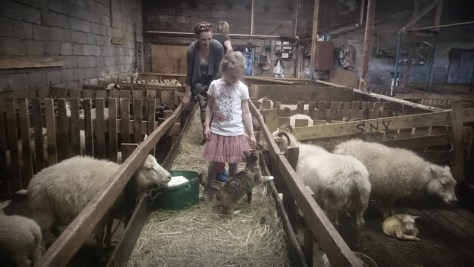 islandzka farma