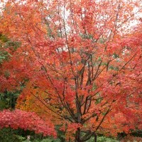 New England fall foliage prediction – 2013