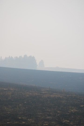 Grizzly Bear Complex Fire, Northeastern Oregon, Holistic Planned Grazing, Fire recovery