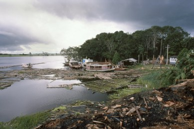 Logs from Cut Trees Being Floated to Lumber Mill, Autazes