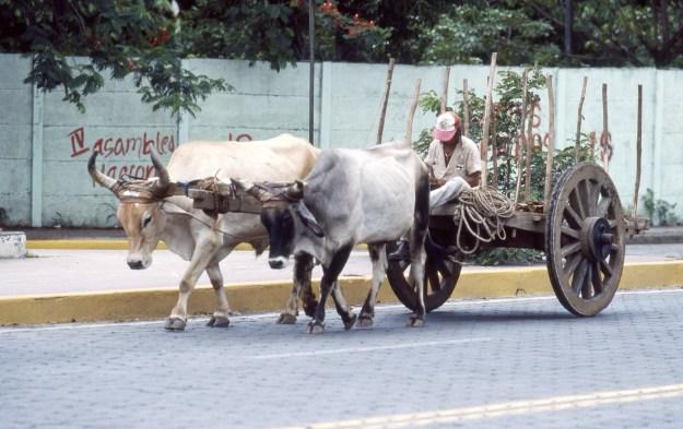 Sleeping Cart Driver