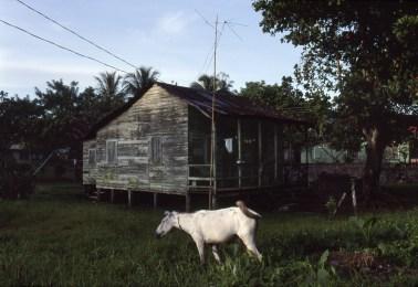 White Burro, Twilight, Nicaraguan Countryside