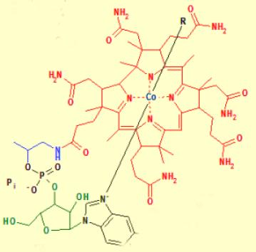 Vitamin_B12_z_Jeffrey_Dach