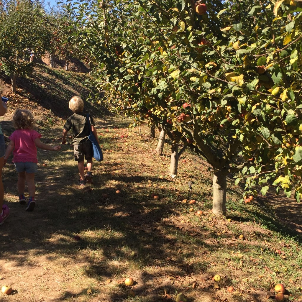 Fall Activity: Apple Picking and Apple Cinnamon Roll Bake