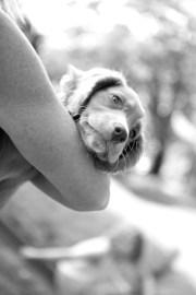 natural pet photography _ 11