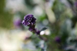 my garden _ 9