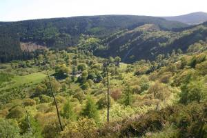 Managed forests in Ireland