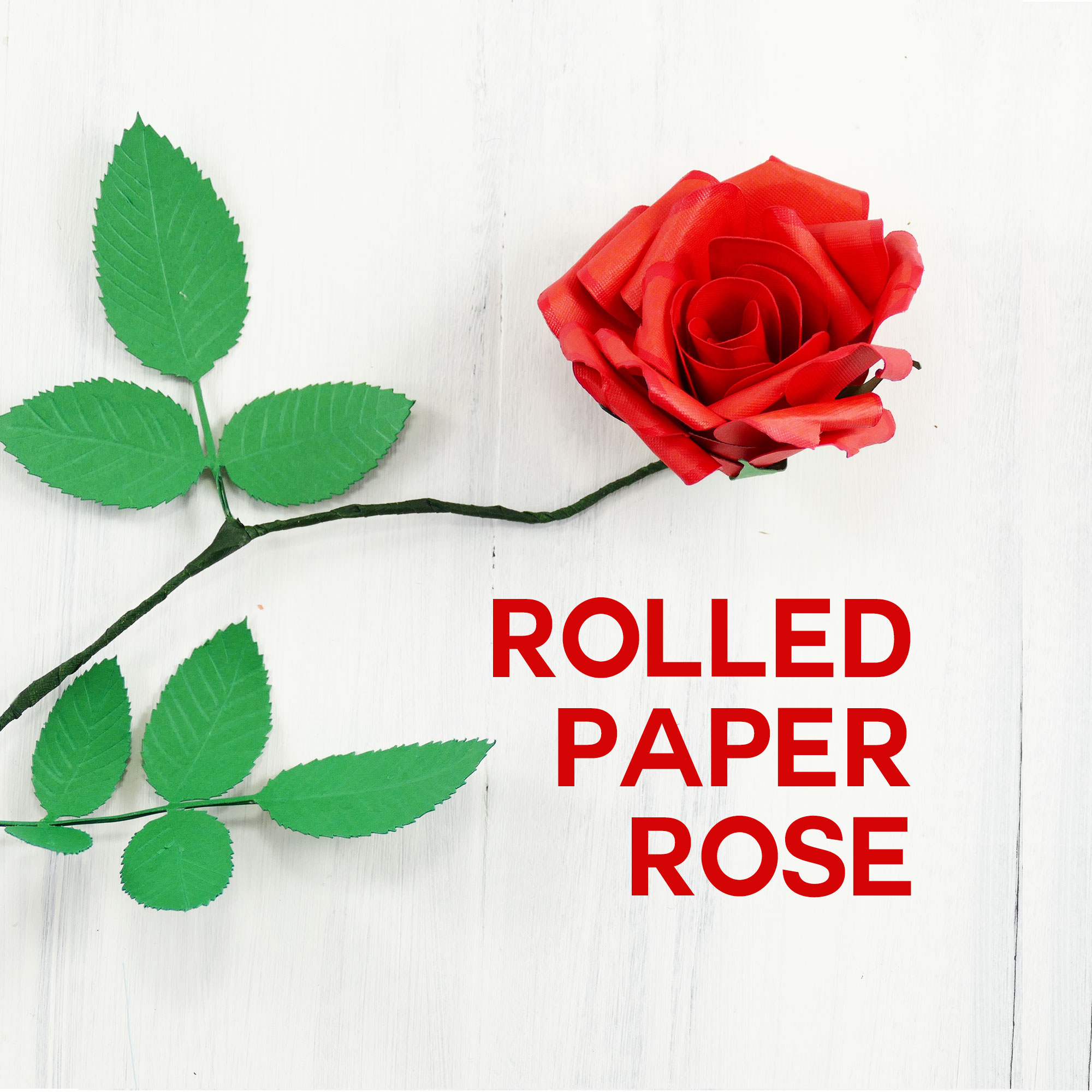 Peculiar Roses Help Me Find Help Me Find Roses Search Rolled Paper Rose Flower Quilled Flower Rolled Paper Rose Tutorial Jennifer Maker Tournament houzz-03 Help Me Find Roses