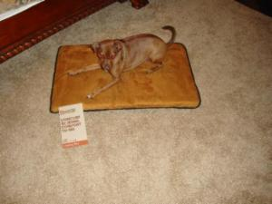 PupLife2 300x225 PupLife – Big Shrimpy Landing Pad