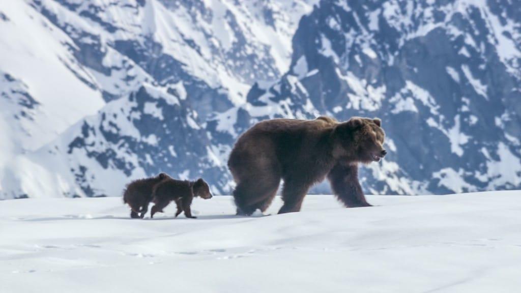 Disneynature  Disneynature Bears Trailer Don't Miss the Heartwarming Sneak Peek Bears