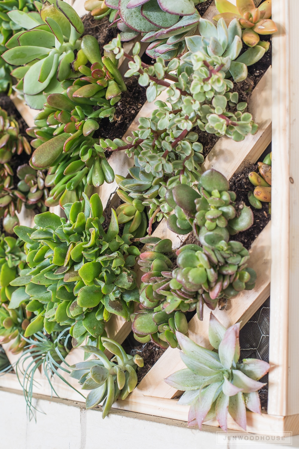 Distinctive How To Make A Vertical Succulent Garden Hanging Succulent Garden Frame Faux Succulent Hanging Garden garden Succulent Hanging Garden