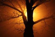 Tree shadowing Sun